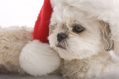Santa puppy Stock Photography