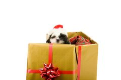 Santa Puppy Christmas Gift Royalty Free Stock Images