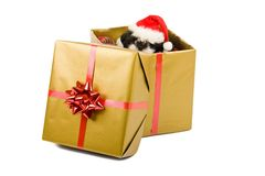Santa Puppy Christmas Gift Royalty Free Stock Photo