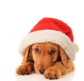 Santa puppy Royalty Free Stock Photos