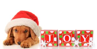 Santa puppy Stock Images