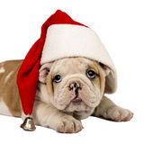 Santa Puppy Royalty Free Stock Images