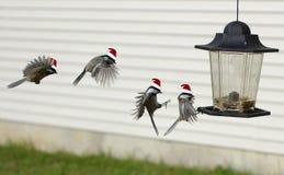 Santa que tem o divertimento do Natal!! Foto de Stock