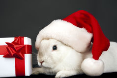 Santa rabbit hat with Christmas box Stock Photography