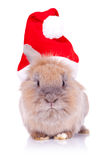Santa Rabbit Looking At The Camera Stock Photo
