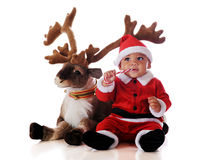 Santa and Reindeer. An adorable biracial Santa eating a candy cane by his reindeer. Isolated on white royalty free stock photos