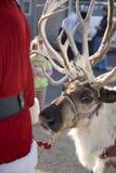 Santa and Reindeer Stock Photography
