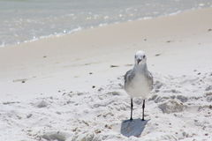 Santa rosa Beach. Florida panhandle  water Royalty Free Stock Images