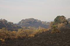 Santa Rosa - parque de Shaloh Rigional após o fogo imagens de stock