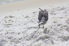 Santa Rosa plaża Obraz Royalty Free