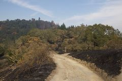 Santa Rosa - Shaloh Rigional Park after Fire. Night from Sunday October 8 to Monday October 9, was devastated forest fire, Shiloh Regional Park was zone of royalty free stock image