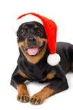 Santa Rottweiler Stock Photos