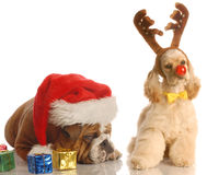 Santa and rudolph dog Royalty Free Stock Photos