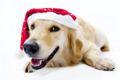 Santa's dog Royalty Free Stock Image
