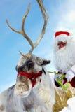 Santa�s drag animal Stock Photo