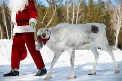 Santa�s friend Stock Photos