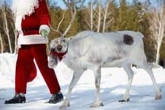 Santa�s friend Stock Photos