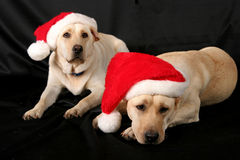 Santa's helpers Royalty Free Stock Photo