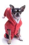 Santa's Little Helper Elf Dog Stock Image