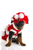 Santa's Puppy Stock Photos