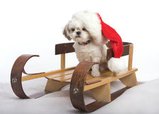 Santa Shih Tzu Royalty Free Stock Photo