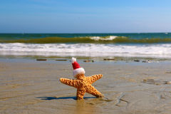 Santa Starfish Photographie stock