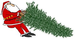 Santa Tugging on a Christmas tree Royalty Free Stock Photography