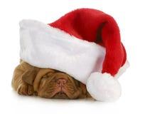Santa valp Arkivbilder