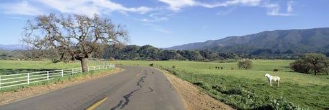 Santa Ynez山在春天 免版税库存图片
