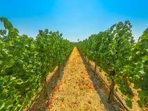 Santa Ynez Valley California photos libres de droits