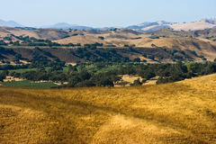 Santa Ynez valley vineyard Royalty Free Stock Images