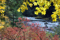 Santiam River Fall Colors Royalty Free Stock Photography