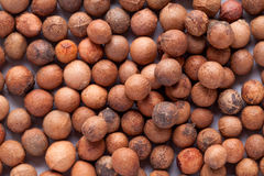 Santalum album  (Indian sandalwood) seed Royalty Free Stock Photo