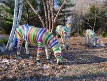 Зебры Santas Стоковое Фото