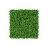Santo Augustine Warm Season Grass en blanco ilustración 3D Imágenes de archivo libres de regalías