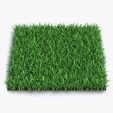 Santo Augustine Warm Season Grass en blanco ilustración 3D Fotografía de archivo libre de regalías