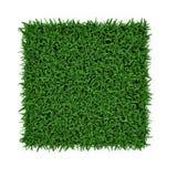 Santo Augustine Warm Season Grass en blanco ilustración 3D Foto de archivo libre de regalías