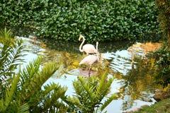 Santo Domingo djur arkivbild