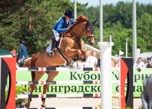 SANTO PETERSBURGO 6 DE JULIO: Rider Valeriya Sokolova en Sir Stanwel Fotografía de archivo libre de regalías