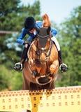 SANTO PETERSBURGO 6 DE JULIO: Rider Valeriya Sokolova en Sir Stanwel Foto de archivo libre de regalías