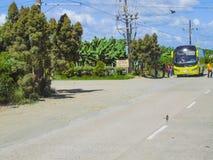 Santo Tomas-Carmen Road com a banana de Cavendish de Tadeco Bana Fotos de Stock
