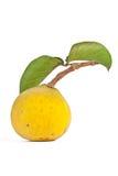 Santol fruit. Stock Photography