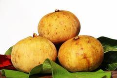 Santol fruit Stock Image