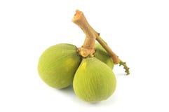 Santol fruit krathon. White background Royalty Free Stock Photos