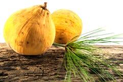 Santol fruit. Or Sandoricum Koetjape is a tropical fruit grown in Southeast Asia Royalty Free Stock Photo