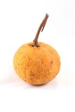 Santol Stock Photo