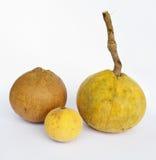 Santol fruits. Santol (Sandoricum koetjape (Burm.f.) Merr.) fruits, several common names in many languages, including gratawn in Thai, kompem reach in Khmer Stock Image