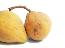 Santol fruits Stock Image