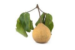 Santol frukt på vit bakgrund royaltyfri bild
