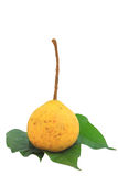 Santol on leaf Stock Photo